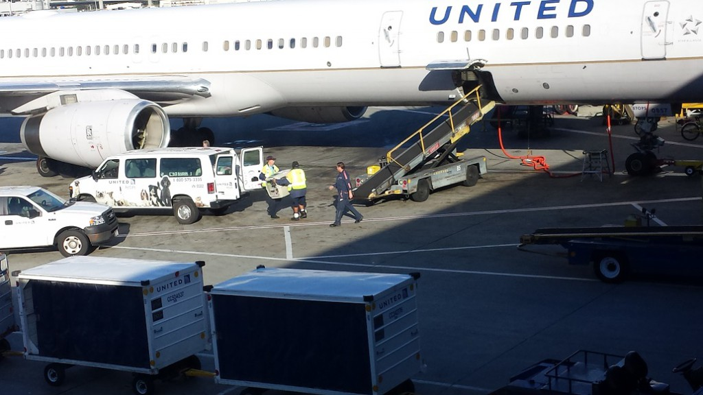 Rockit being transferred from van to plane.